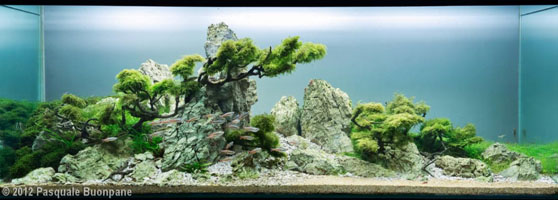 Aquascape designs - Design aquasacpe ...