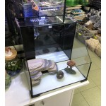 DoPhin 2 in 1 Turtle and fish Aquarium