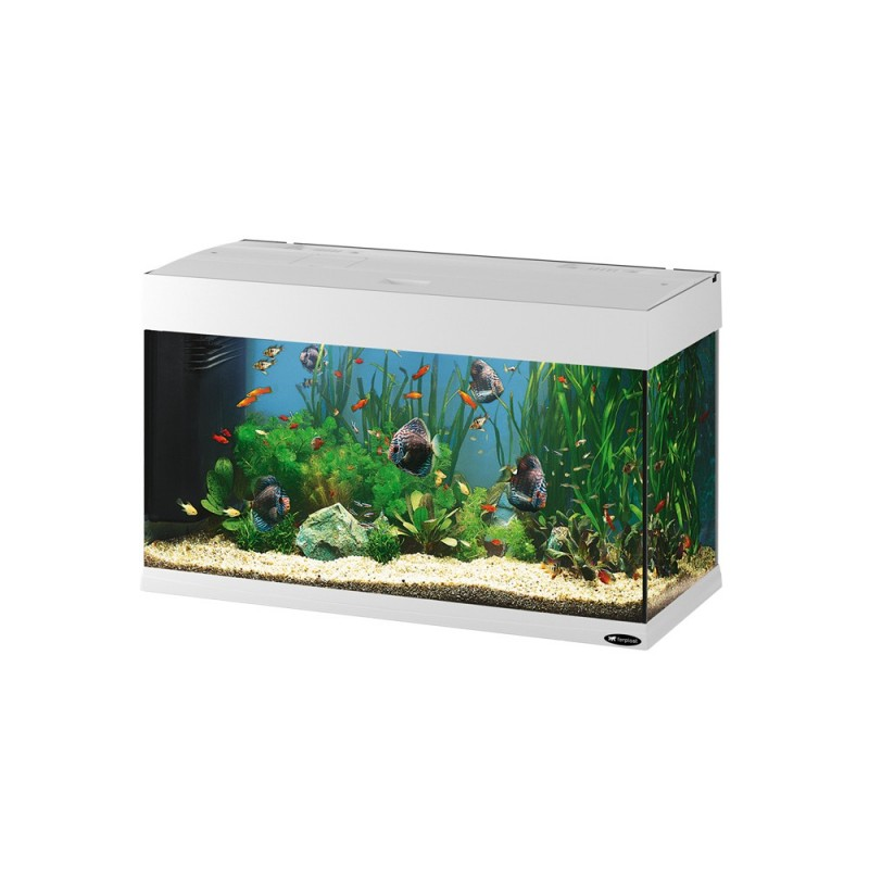 Fish tank maintenance service cost dubai 2017 fish tank for Fish tank price