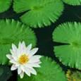 Pond & Garden Series